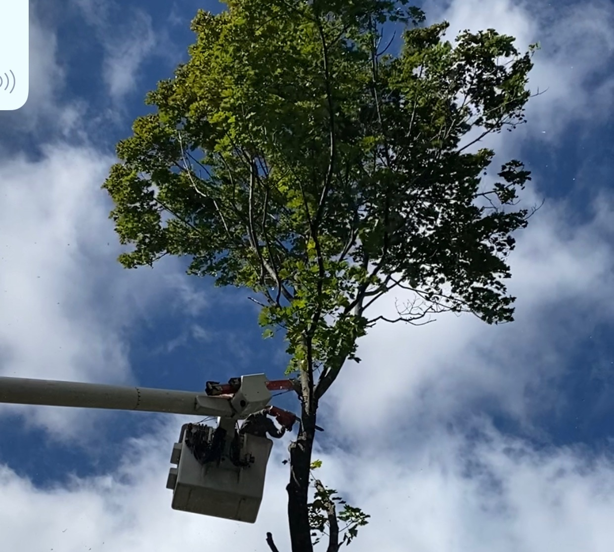 Hazardous tree removal done safely!
