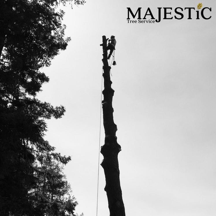 Majestic Tree Service logo