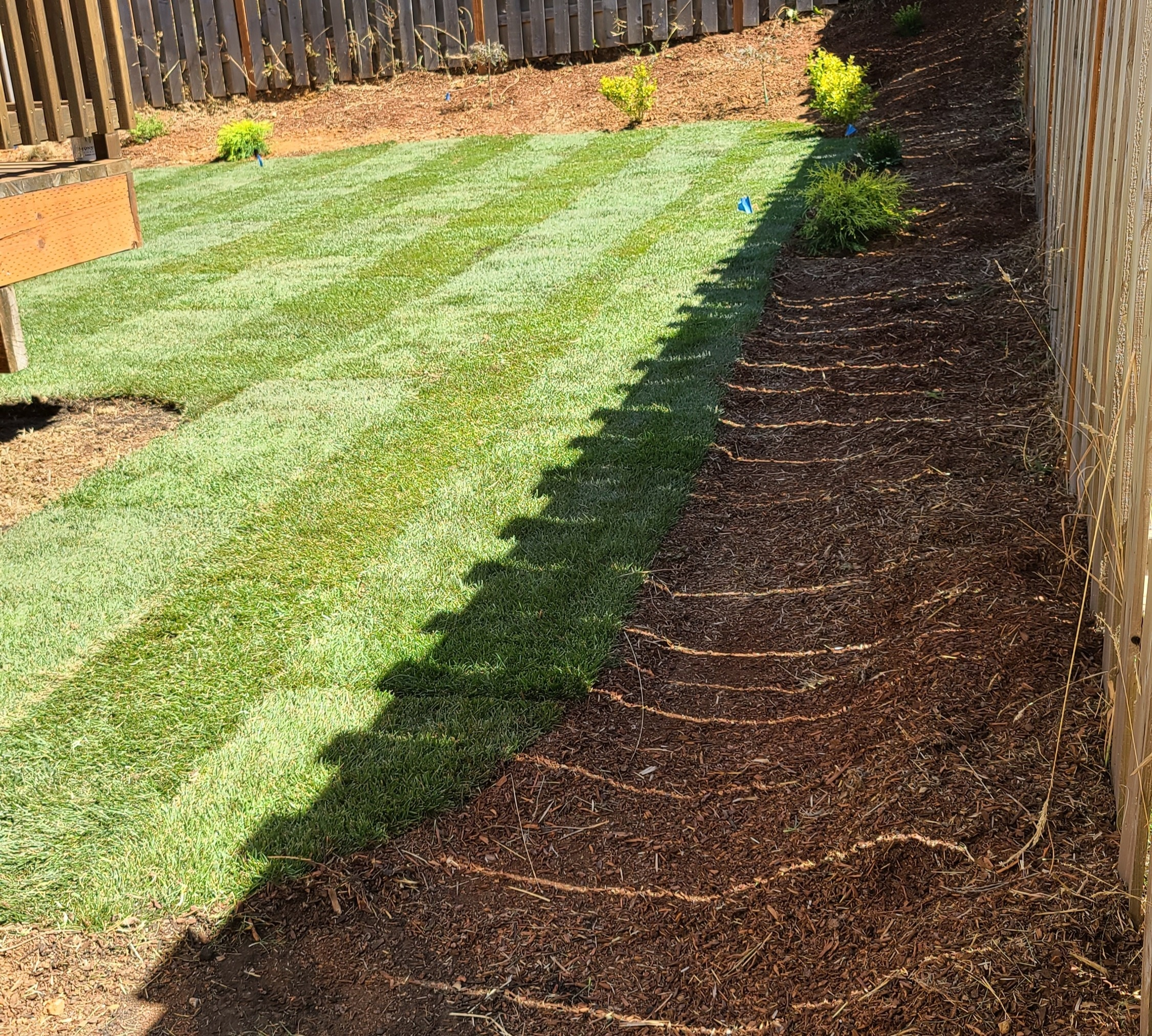New lawn sod replace