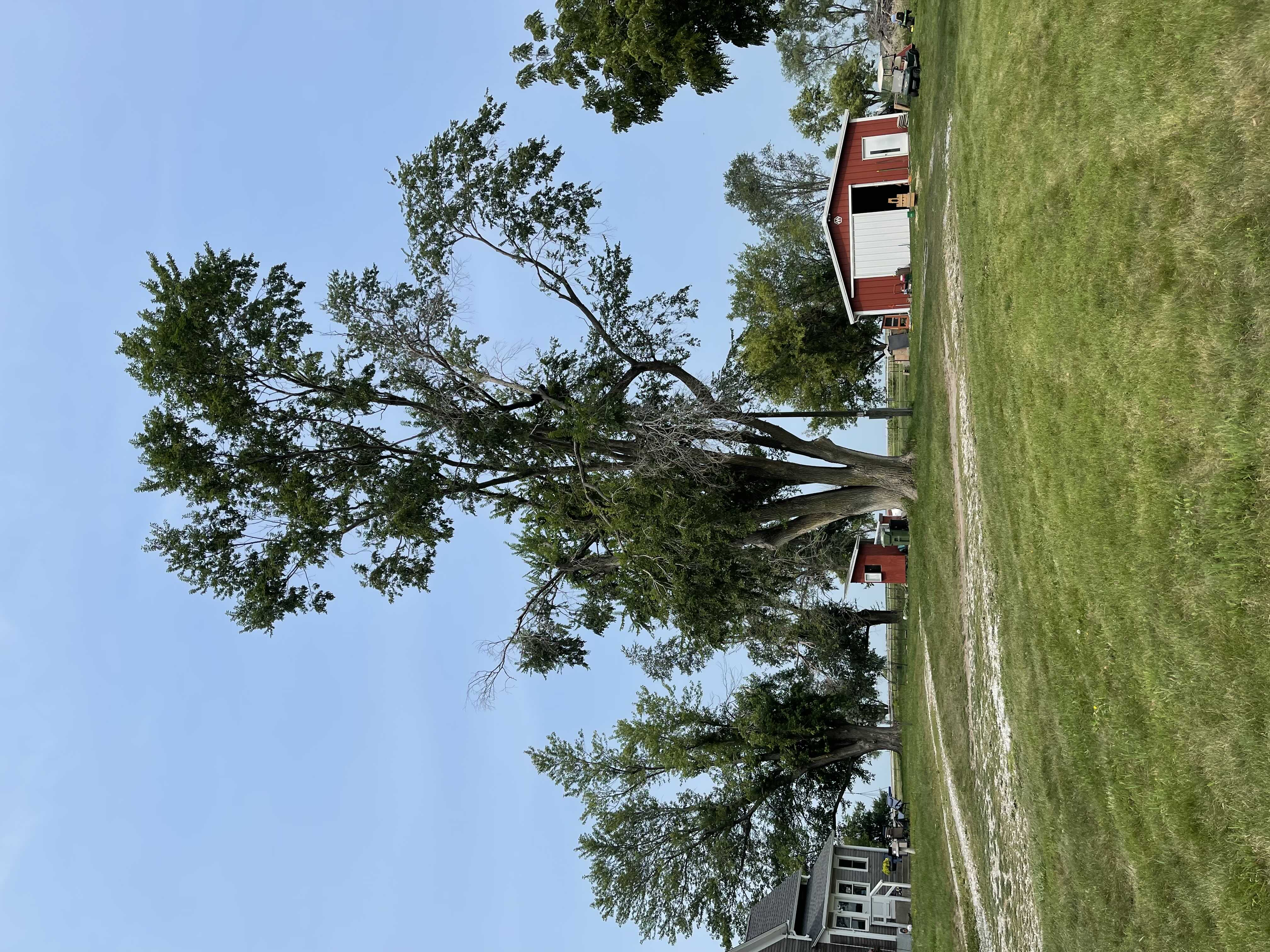 Tree Service Project