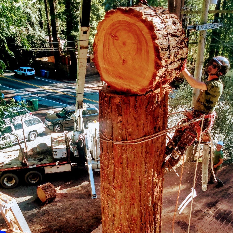 ExTREEme Tree Experts logo