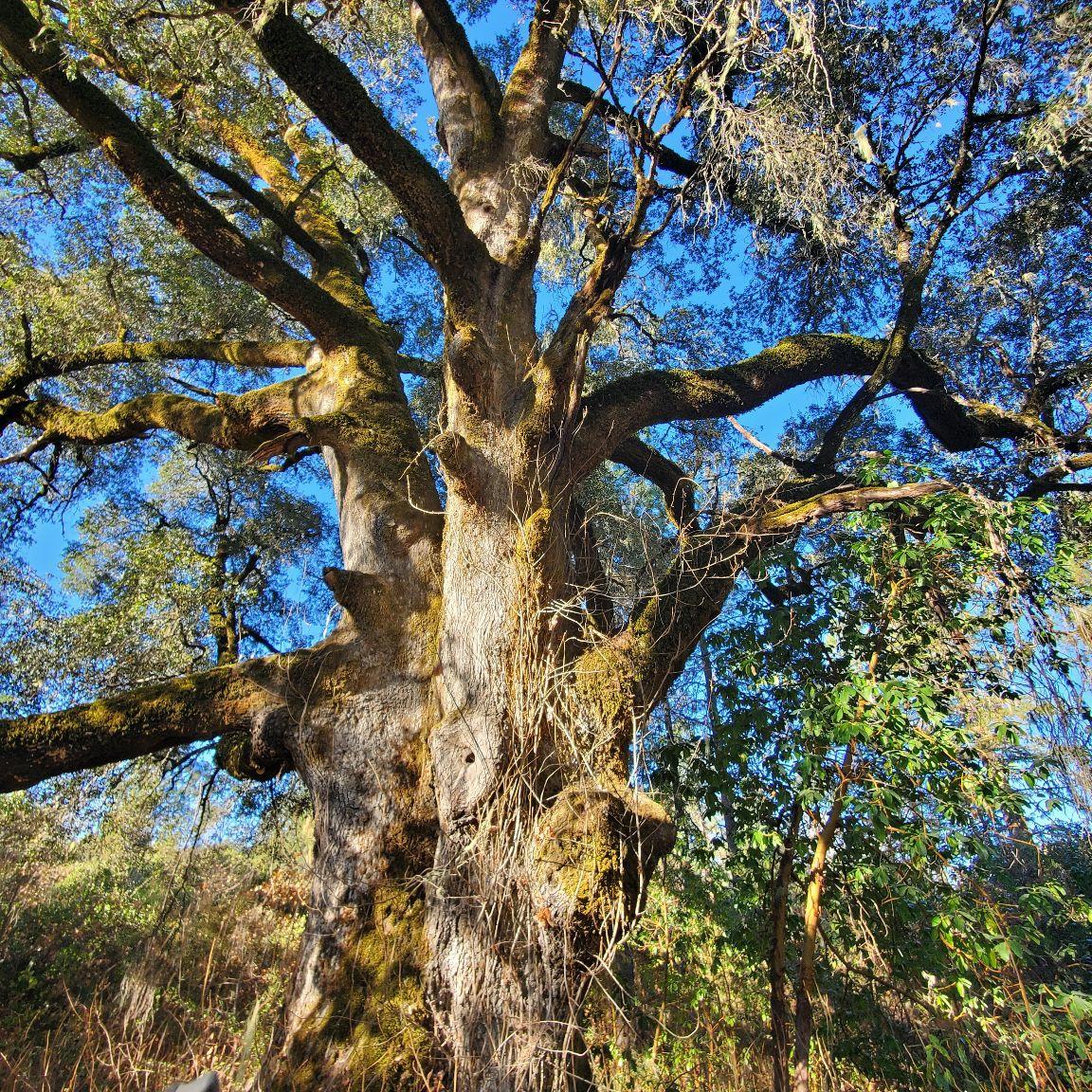 Sonoma county vegetation management logo